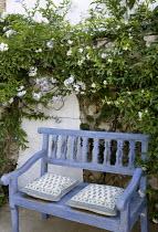 Painted wooden bench with cushions, Solanum laxum 'Album' syn Solanum jasminoides, Trachelospermum jasminoides
