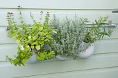 Herbs in suspended containers in outdoor kitchen