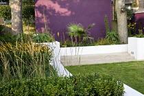 Raised beds, lawn, purple wall, Washingtonia filifera