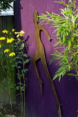 Cut-out metal figure on purple wall, Rudbeckia lacinata 'Herbstsonne'