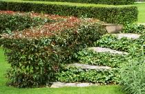 Steps, ivy, box and low Eugenia myrtifolia hedge