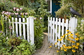 Crinum x powellii and rudbeckias, white picket fence and gate, bird ornaments