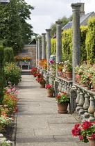 Balustrade, columns, pelargoniums in pots