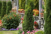 Balustrade with pelargoniums in pots, columns