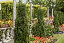 Pelargoniums in terracotta pots on balustrade, columns
