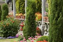 Pelargoniums in terracotta pots on balustrade