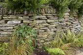 Dry-stone wall in exotic garden