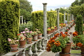 Stone balustrade with pelargoniums in containers, columns