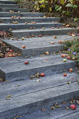 Wooden steps with fallen apples