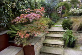 Timber bench, brick and rendered, red painted wall, raised bed with Acer palmatum 'Osakazuki', steps to lawn