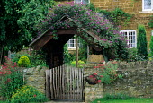 Clematis viticella over arch