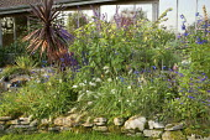Late summer border, dry-stone edging, Pennisetum villosum, salvias