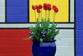 Tulips by Mondrian style painted wall