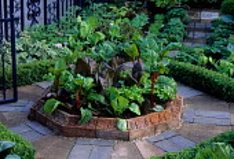 Brick edged vegetable wheel, swiss chard