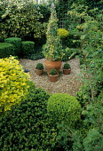 Small formal town garden, clipped box
