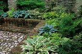 Hostas and ferns in raised beds