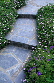 Cobble and slate paving and steps, geraniums