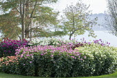 Dahlia bed by Bodensee