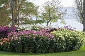 Dahlia bed by lake