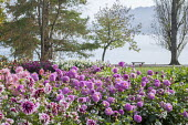 Colourful dahlia border, view over Bodensee