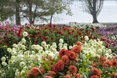 Colourful dahlia border by Bodensee