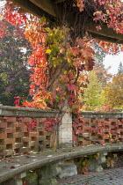 Stone bench in pergola with Virginia creeper