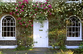 Double fronted house with white painted front door, climbing roses