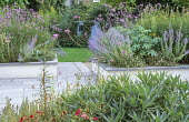 Slate patio, raised beds with perennials, Verbena bonariensis, Melianthus major, Salvia uliginosa, view to shed
