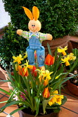 Easter bunny decoration in container with Tulipa 'Flair', Narcissus 'Jetfire' and Primula vulgaris