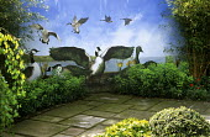 Topiary goose of Ilex crenata, Hedera helix 'Amberwaves', mural by Karen George