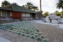 Festuca glauca in Palm Springs front garden