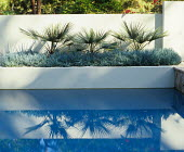 Palm trees in raised bed by pool designed by Pamela Palmer