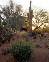 Steve Martino Garden in Paradise Valley