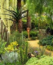 Palms and cacti in Venice, California garden