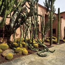 Cacti in border