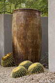 Large container, cacti