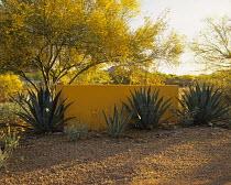 Paradise Valley Garden designed by Steve Martino