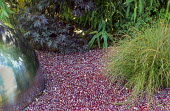 Metal dome, glass pebble mulch, red acer, grasses