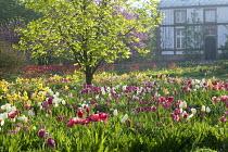 Colourful tulip meadow