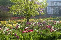 Naturalised bulb meadow