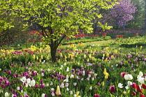 Colourful bulb meadow