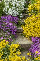Steps, edging of alyssum, aubretia and arabis