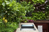 Outdoor kitchen, sink, lemon tree, salad leaves in raised beds, Pak Choi 'Red Lady', mizuna