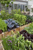 Vegetable garden, raised beds, chives, cabbage, peas