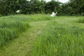 Mown grass path through wildflower meadow, butterfly ornaments on stakes
