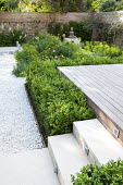 Clipped box hedge, steps to decked patio, white gravel path, buddha
