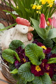 Chicken ornament in basket of primroses, tulips and daffodils