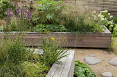 Raised timber bed, Deschampsia cespitosa 'Bronzeschleier', Melianthus major, Alchemilla mollis, stepping stone path