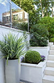 Steps to upper level, raised beds, Astelia chathamica in container