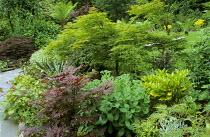 Acers, hylotelephium syn. sedum, tree fern